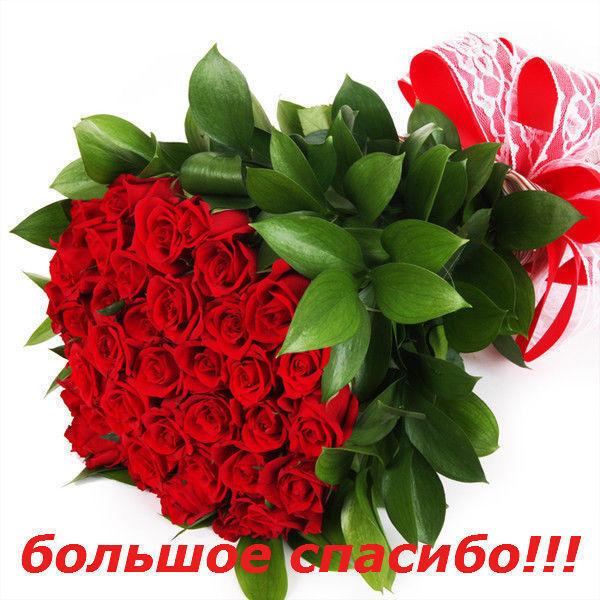 http://life-panorama.narod.ru/Bolshoe_spasibo.jpg